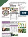 Vignia Unguiculata (Frijol Castilla)