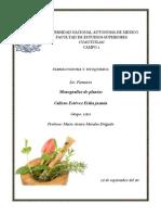 Monografia de Plantas medicinales