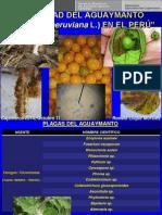 Sanidad del Aguaymanto (Physalis peruviana), en el Perú.  SENASA. Celendín - Cajamarca - Perú