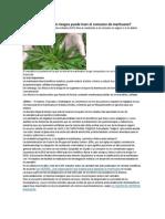 Qué Beneficios y Qué Riesgos Puede Traer El Consumo de Marihuana