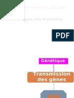 génétique des haploide