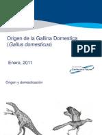 1.Origen de La Gallina Domestica(Gallus Domesticus)