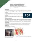 Understanding the Shoulder Article-2014