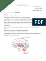 Brainstem Student Notes