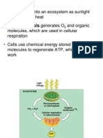 9. CH 9 PPT Cellular Respiration