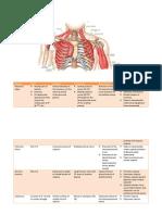 Anterior Pectoral Gridle 2014