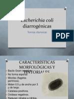 Escherichia Coli Diarrogénicas