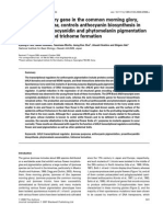 A BHLH Regulatory Gene in the Common Morning Glory I. Purpurea