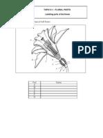 Sci - Sample Floral Part - Latest-flowering Parts