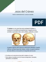 Huesos Del Cráneo, puntos craneometricos y suturas craneales