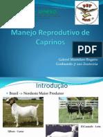 Apresentação - Manejo Reprodutivo Caprinos