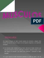 Musculos Del Cuerpo Humano