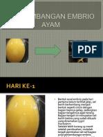 Perkembangan Embrio Ayam Tahap Awal