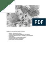 diapositiva de histologia