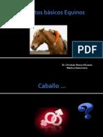 Conceptos básicos Equinos