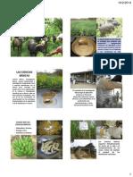 Ciencias basicas agroecologia.pdf