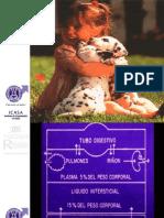 deshidratacionenpediatraicasa-1205186185937343-3.ppt