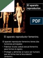 Aparatos Reproductores Masc y Femenino