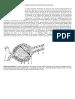 Glomerulopatía asociada con las infecciones parasitarias.docx