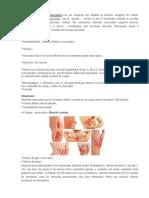 Bolile Sistemului Muscular