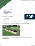 Cultivar Sobre Balas de Paja - Jardineria