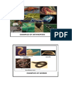 Arthropods and Worms