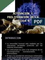 ACT y PROL Linfocitos B