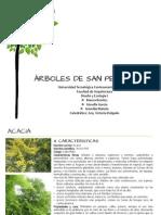 Cuaderno Arboles SPS