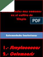 Principales Enfermedades Bacterianas en Tilapia