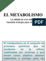 METABOLISMO GLUCOSA 1