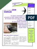 El vencejo Comun.pdf
