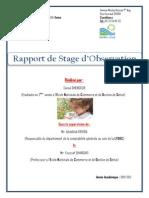 Rapport de stage SANAA (Réparé) PDF.pdf