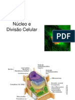 ncleoedivisocelular-120608155228-phpapp01