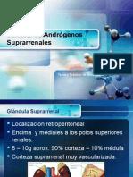 6168401-Androgeno-Suprarrenales