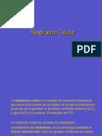 207_Respiración+Celular