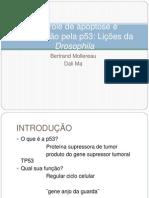 seminario-oncogenese