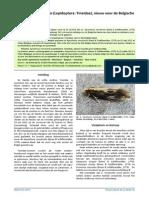 Agnathosia mendicella (Lepidoptera
