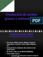 109400168-betaoxidacion.ppt
