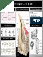 Cartel Anatomia Dental Del Perro