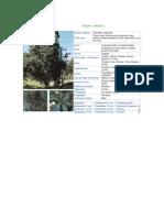catalogo de especies arboles.pdf
