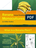 banana presentation