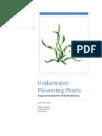 underwater flowering plants