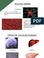 Celulas Diana