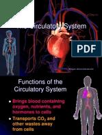 Circulatory System Anp