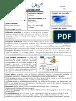 Ficha Técnica de Parásitos. Docx