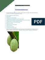 Mapa Potencial Del Cultivo de Cacao en Mexico