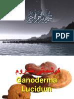 Magic Mushroom Urdu Shahzad Shameem.ppt