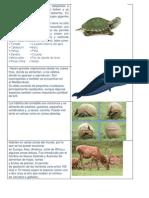 Las Tortugas Terrestres están adaptadas a una vida fuera del agua.docx
