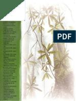 Tratado de Medicina Natural Quirologia Irologia y Sintomatologia v m Lakhsmi
