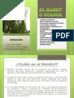 El Bambú o Guadua